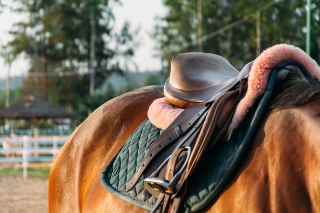 horse saddle - soft focus with film filter