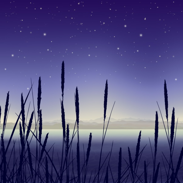 Starry night landscape with reeds