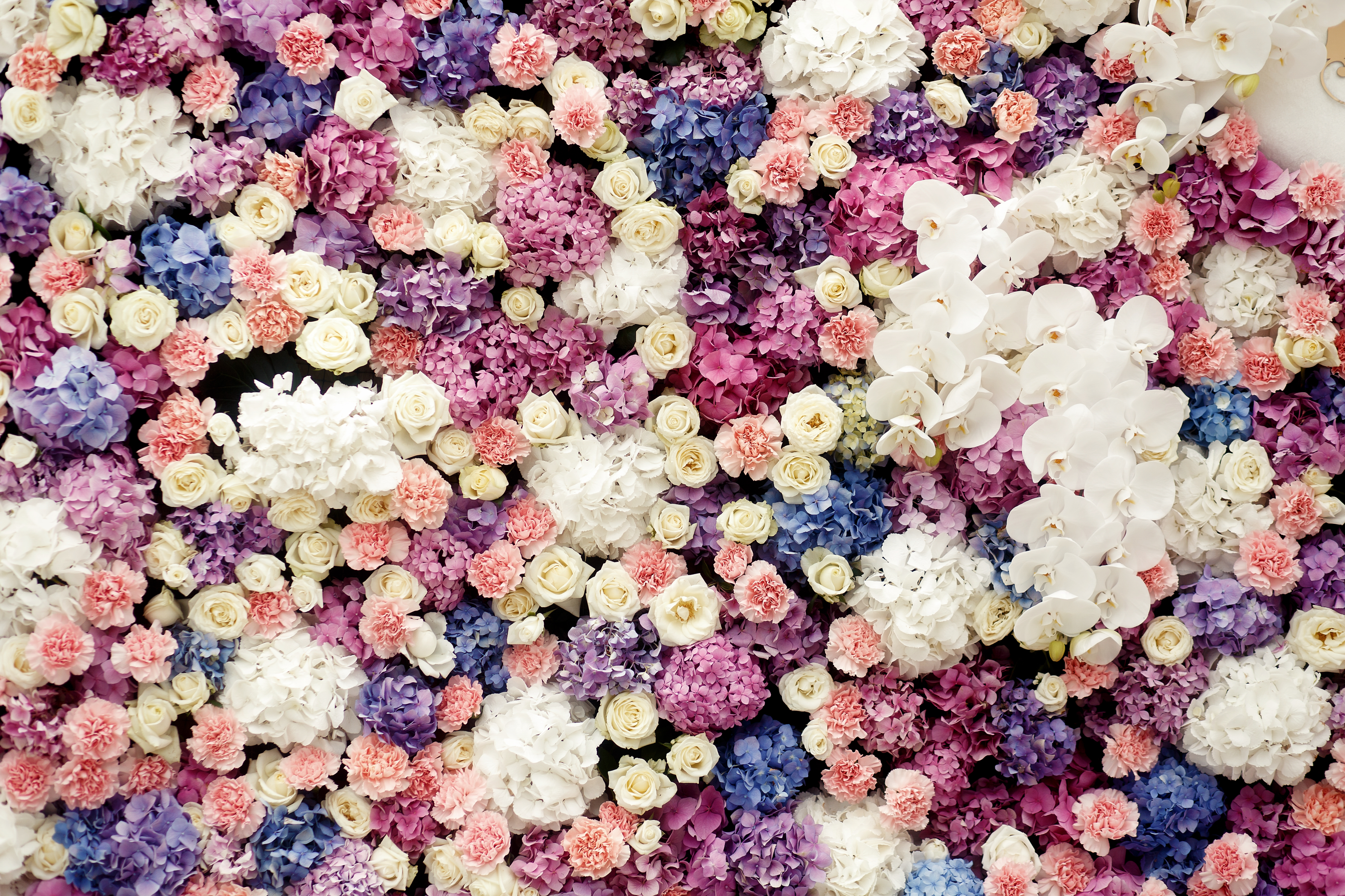 Lots of hydrangeas, roses and pinks make a colorful wall