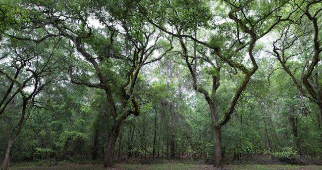 wormsloe-plantation-ii-1334468-1278x677