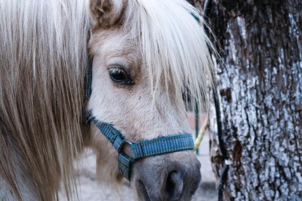 Pony Face near the Tree