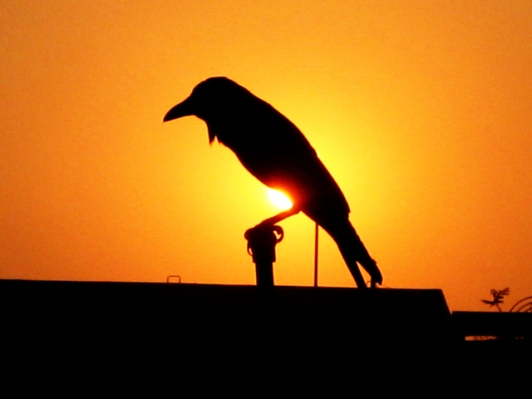 crow-1376188-640x480